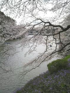2010chidorigafuchi01.jpg